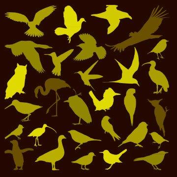 Patagonia Birdwatching