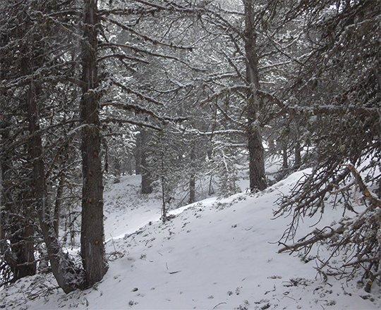 Randonnée Camí de Mereig