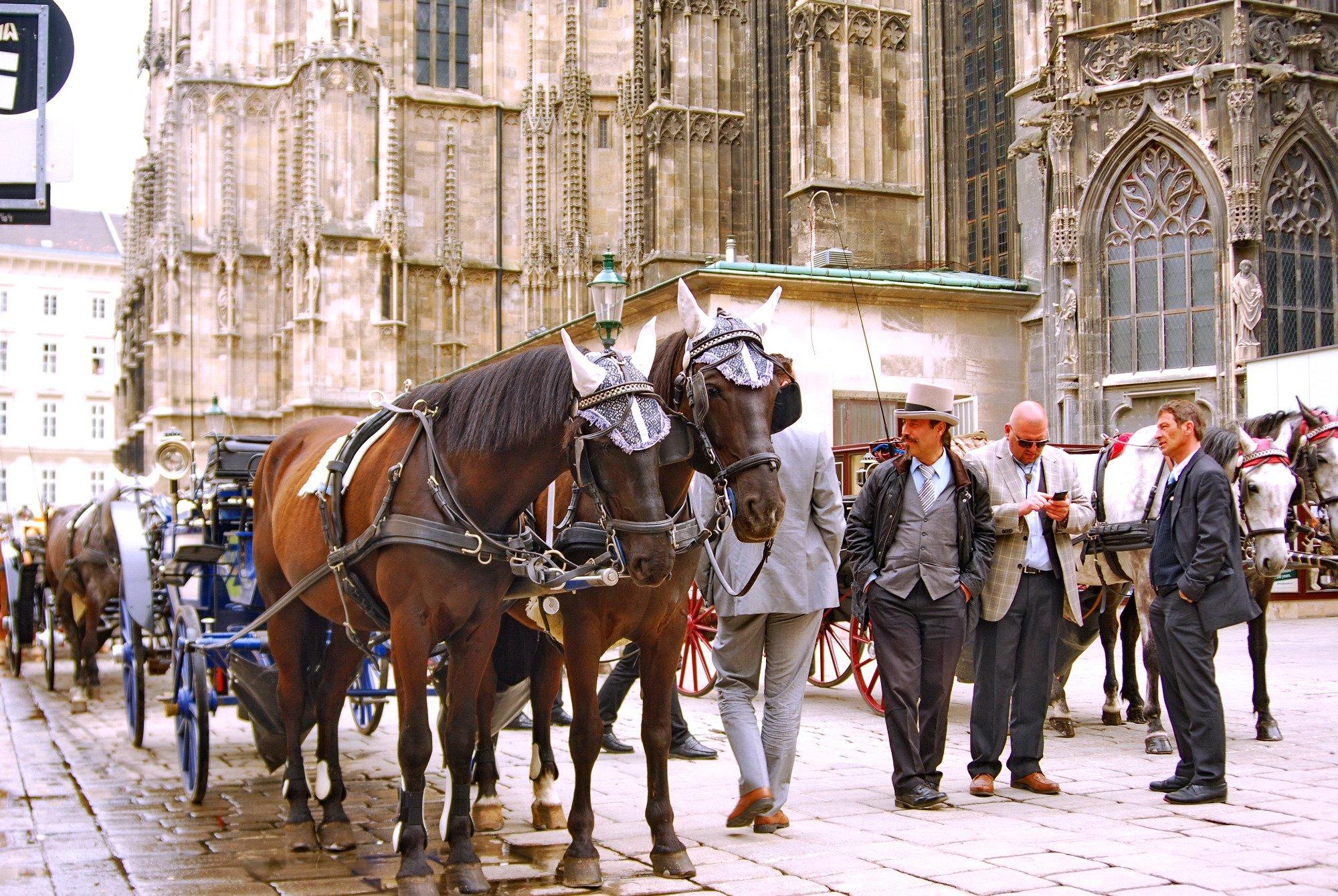 Лошади в кепках в Вене