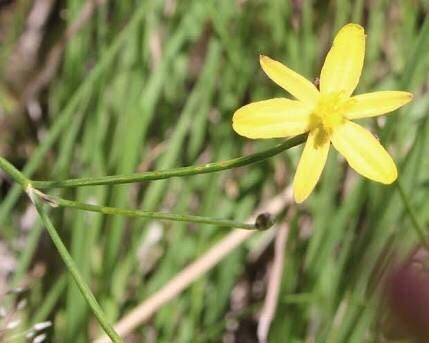 Bababi Djinanang Native Grasslands Reserve