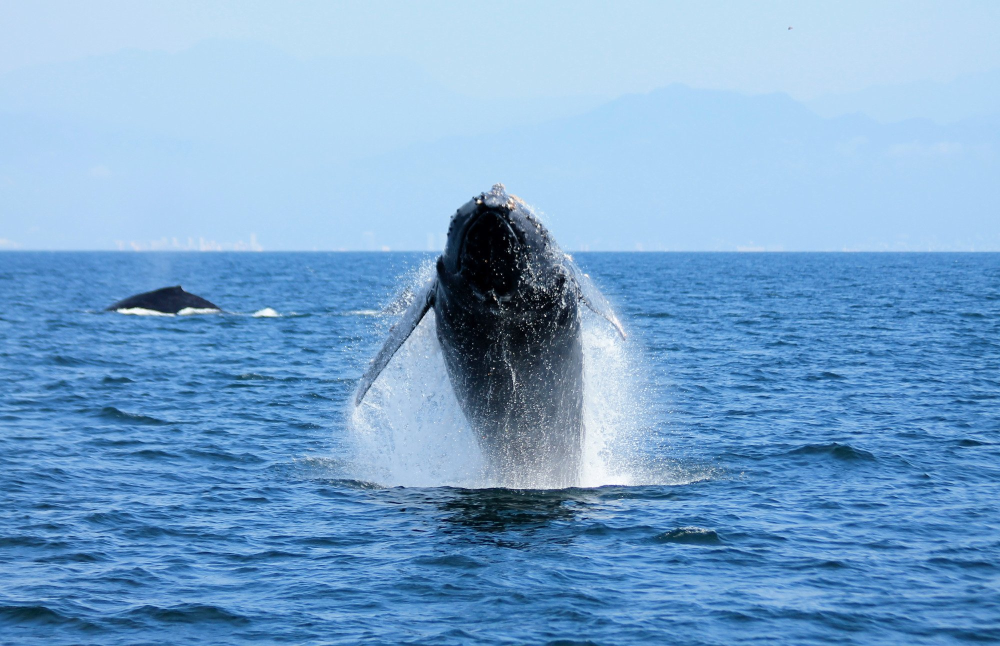 Great place to whale watch during the season.
