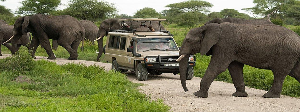 Beauty of Africa Safaris
