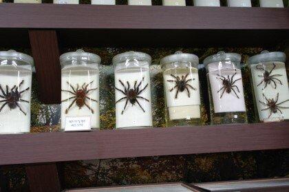 Jupil Spider Museum