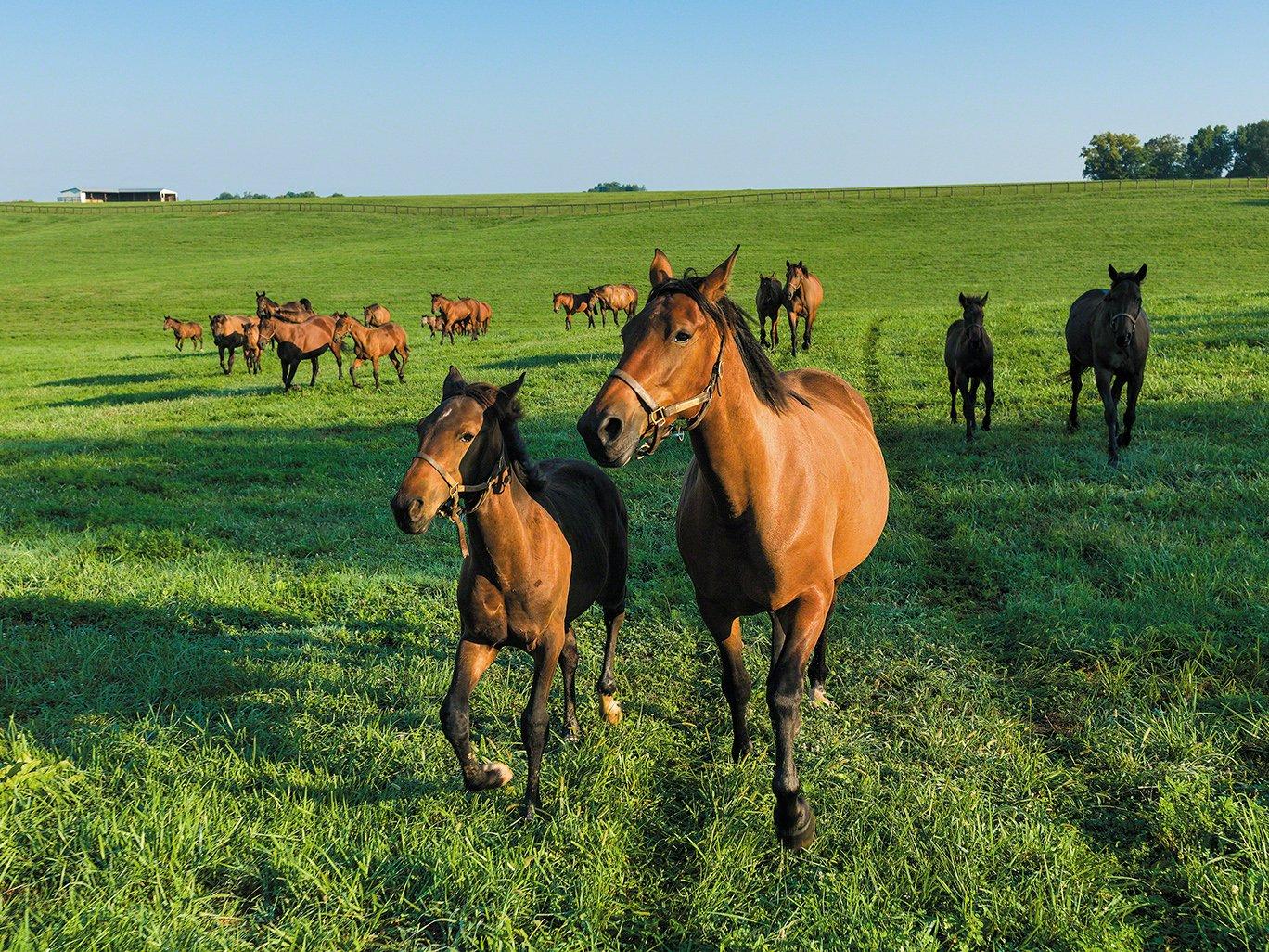 Horse Farm Views at the Horse Capital of the World: Lexington, Kentucky