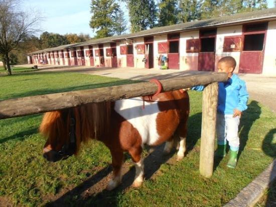 Centre Equestre du Domaine du Muret