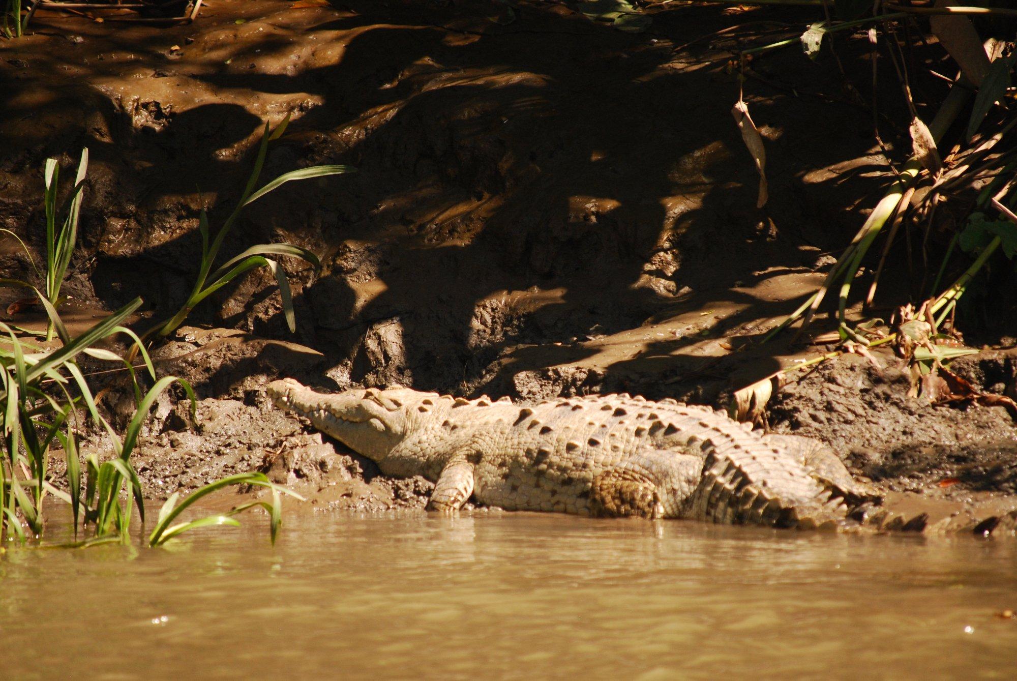 River cruise in Costa Rica