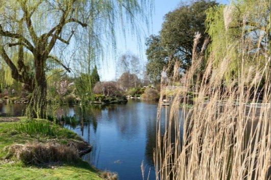 حديقة ريجينت