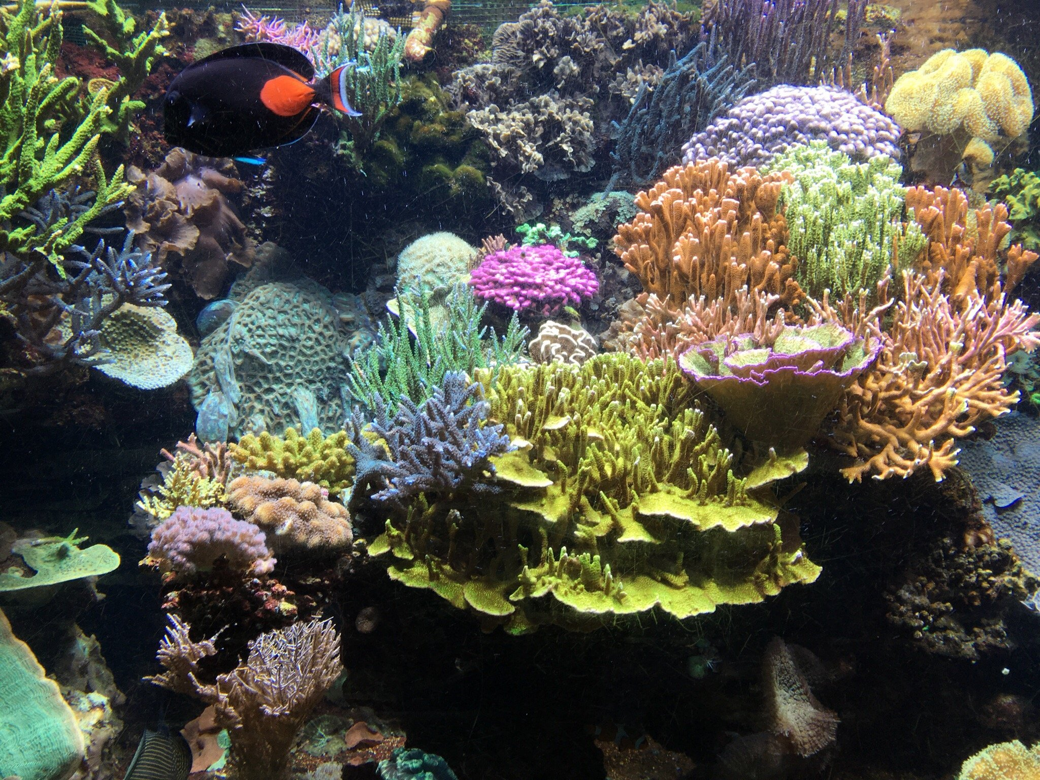 aquarium du cap d agde cap d agde top tips before you go tripadvisor