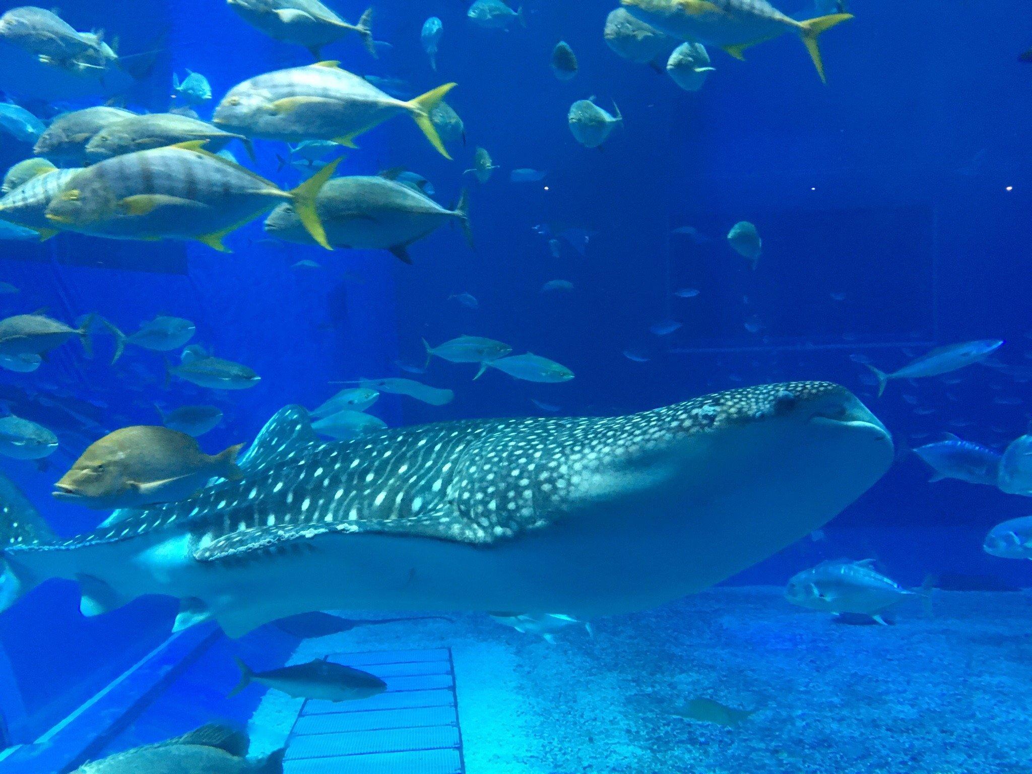 Okinawa Churaumi Aquarium (Motobu-cho): from USD 603 - Top Tips Before You Go...