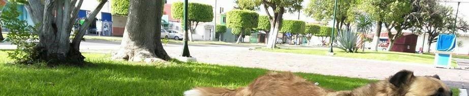 Jardin Lazaro Cardenas del Rio