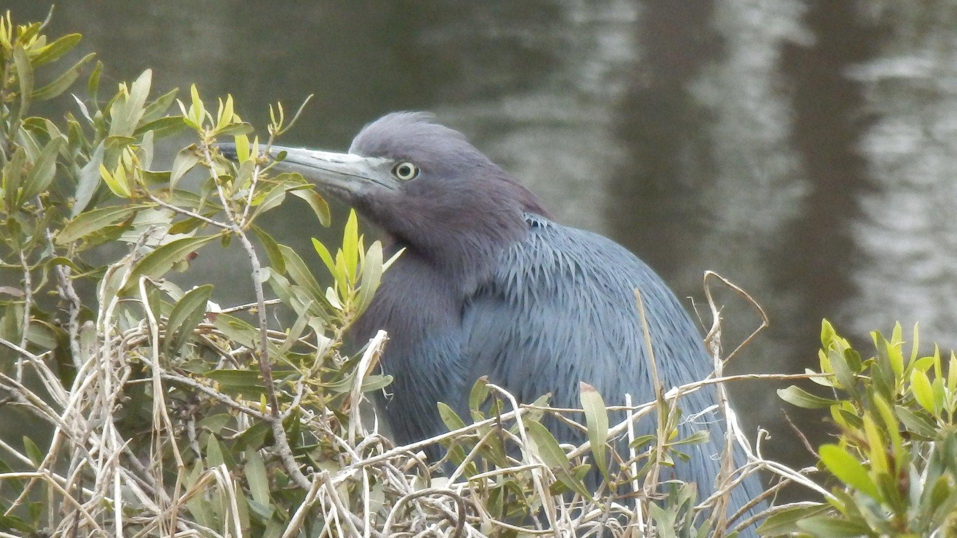 Jarvis Creek Bird Sighting
