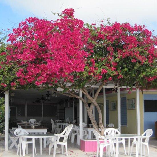 Anegada reef hotel british virgin island