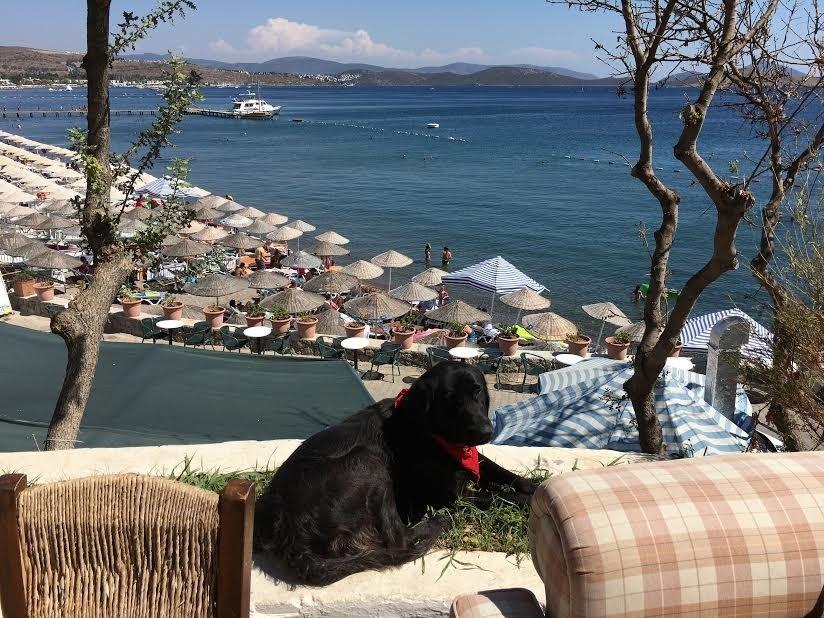 Portofino Hotel