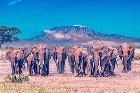 Cruzeiro Safaris