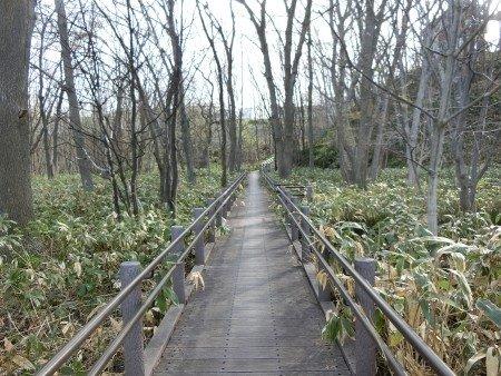 Kiyota Ryokuchi Park