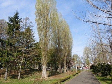 Fushiko Park