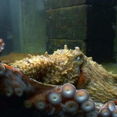Westport Aquarium
