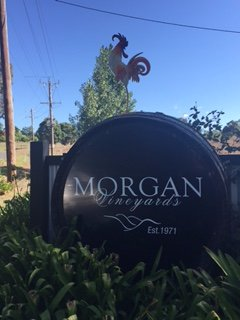 Morgan Vineyards