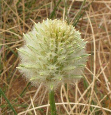 Derrimut Grassland Reserve