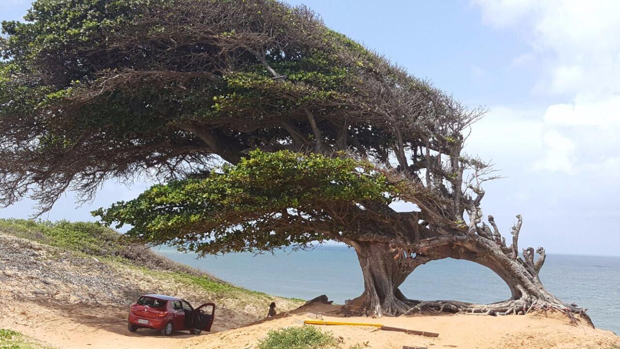 Árvore do Amor