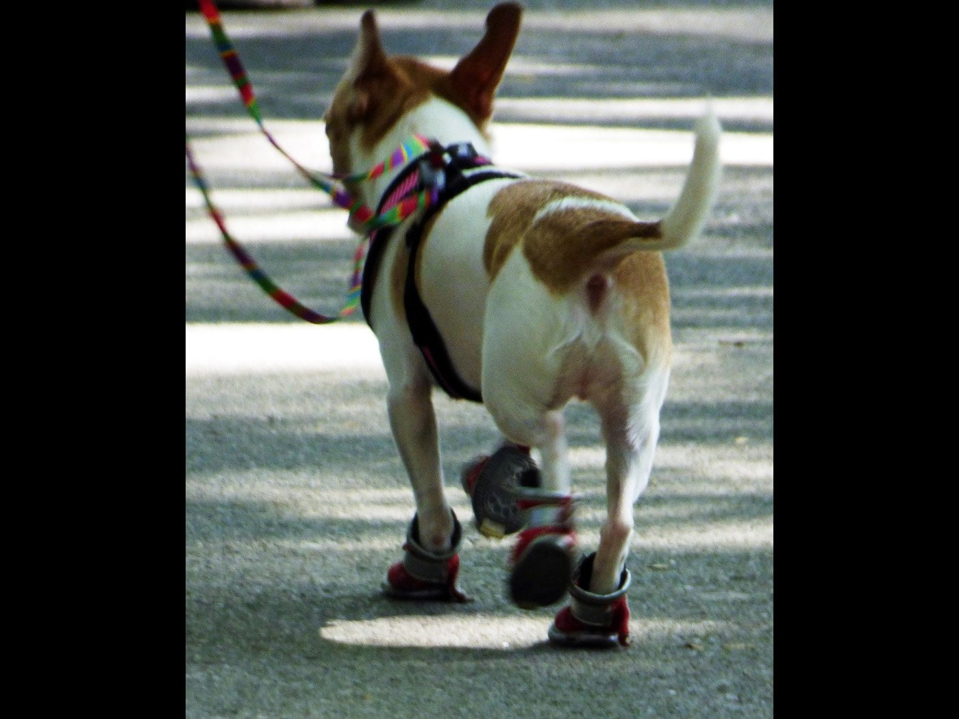 'HOT DOG' in shoes to keep feet cool in Central Park