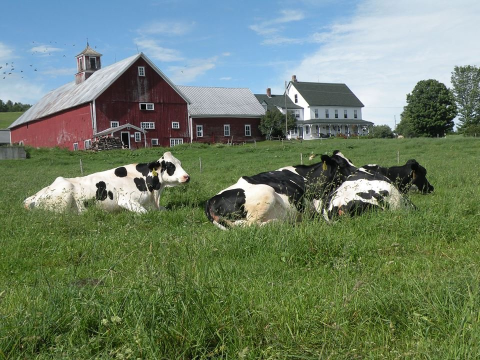 Emergo Farm Danville Vt Omd Men Och Prisj Mf Relse