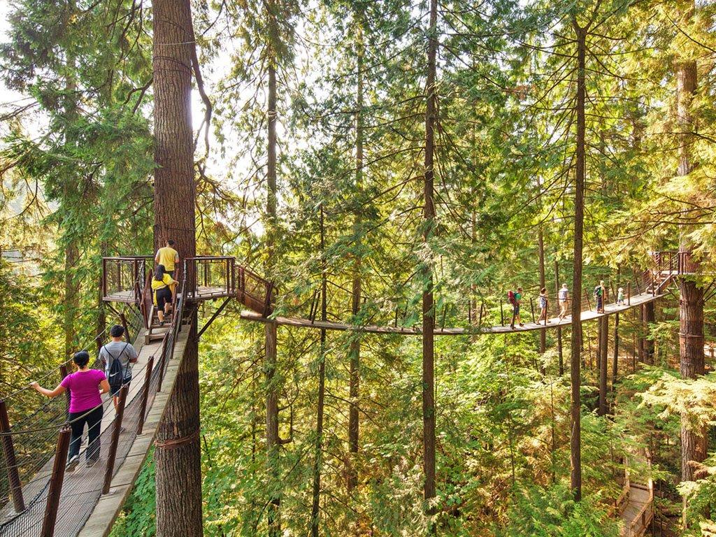 The Treetop Adventure at North Vancouver's Capilano Suspension Bridge Park