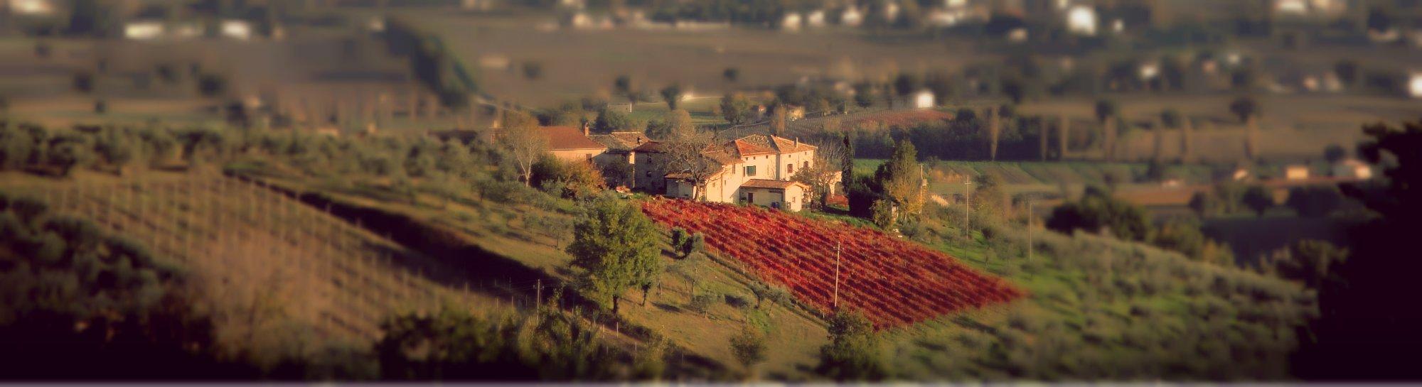 Azienda Agraria Brunozzi