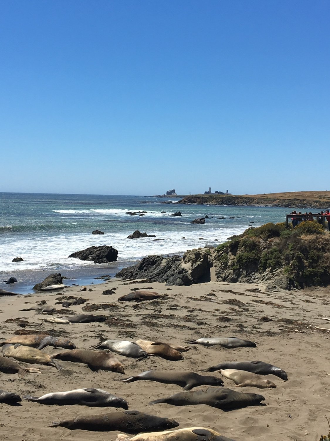 View of the sea lions