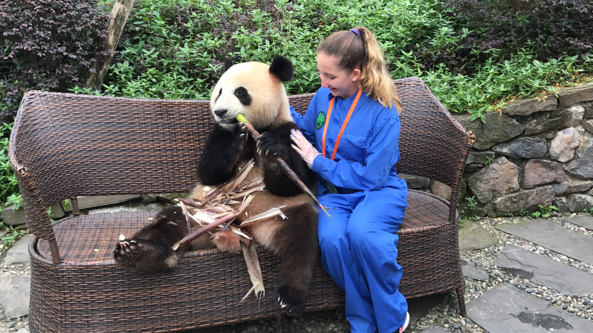china dujiangyan panda volunteer