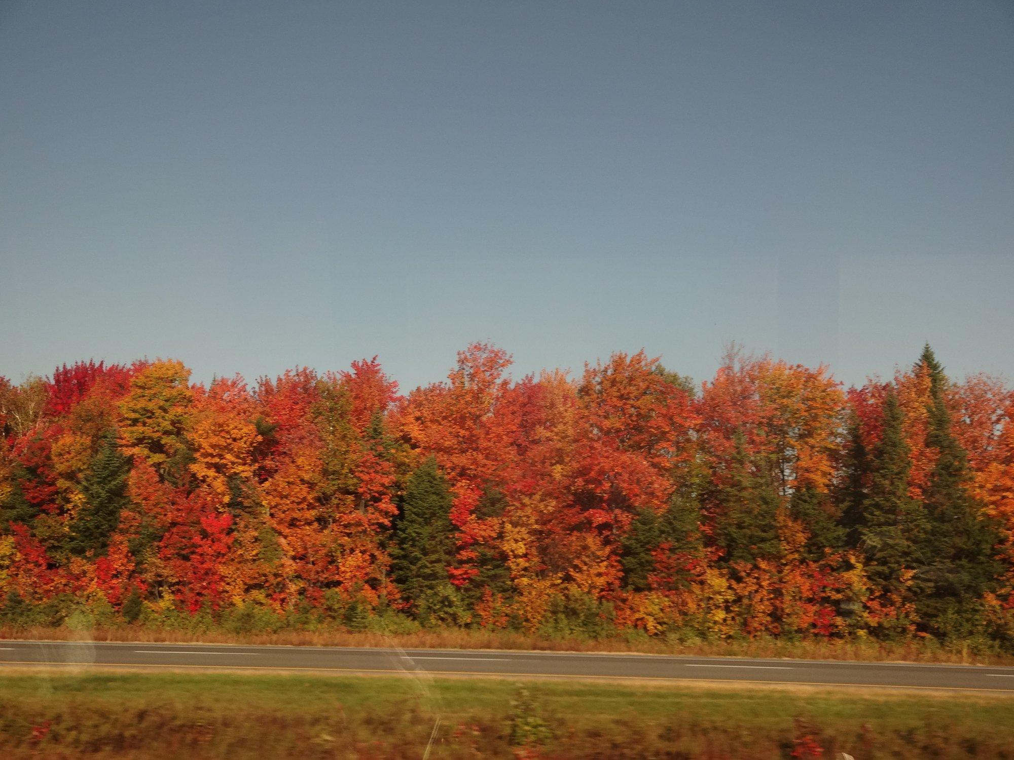 ケベックシティ近郊の紅葉