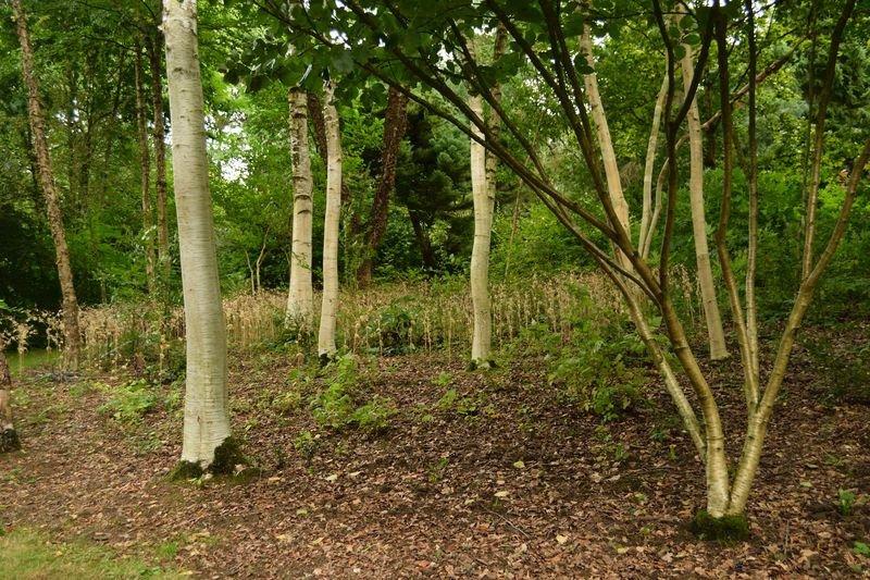 Le jardin de bellevue beaumont le hareng 2017 ce qu for Beaumont le hareng jardin de bellevue