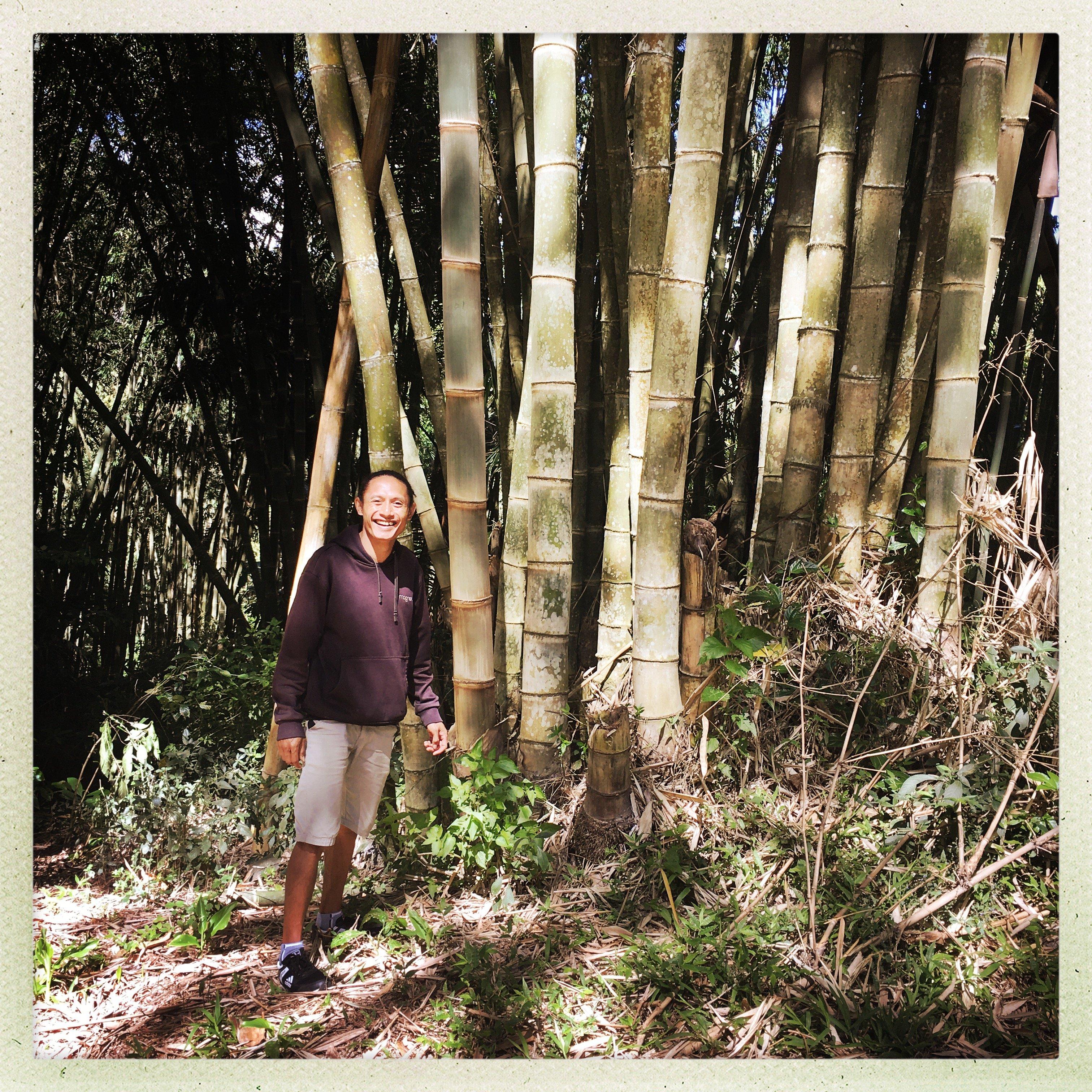 Bamboo forest, komodo island, lokal market, inerie volcano