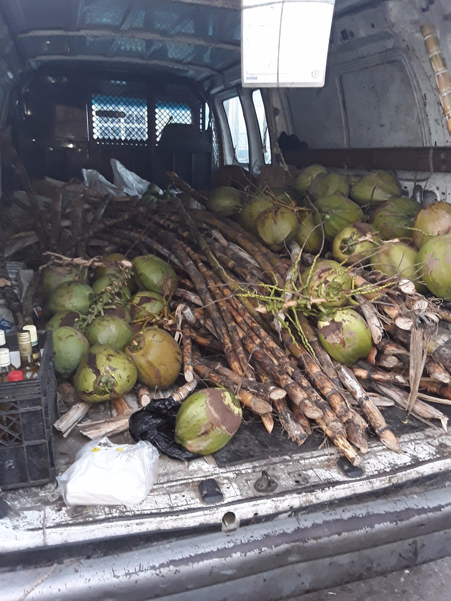 We go crazy for coconuts! Do you? Coconuts and sugarcane are in abundance