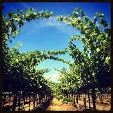 Vital Wines