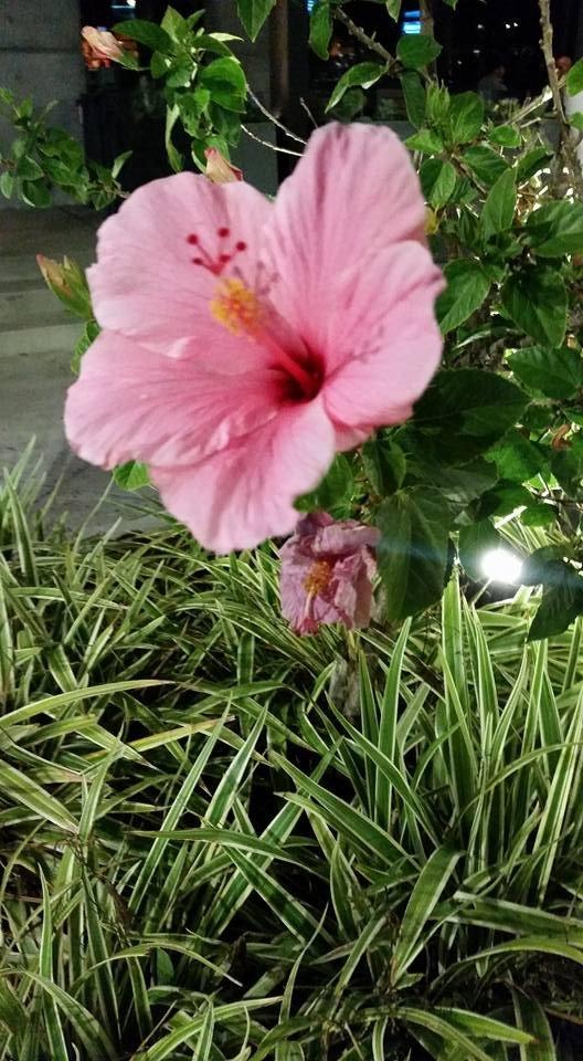 Flowers on Boardwalk