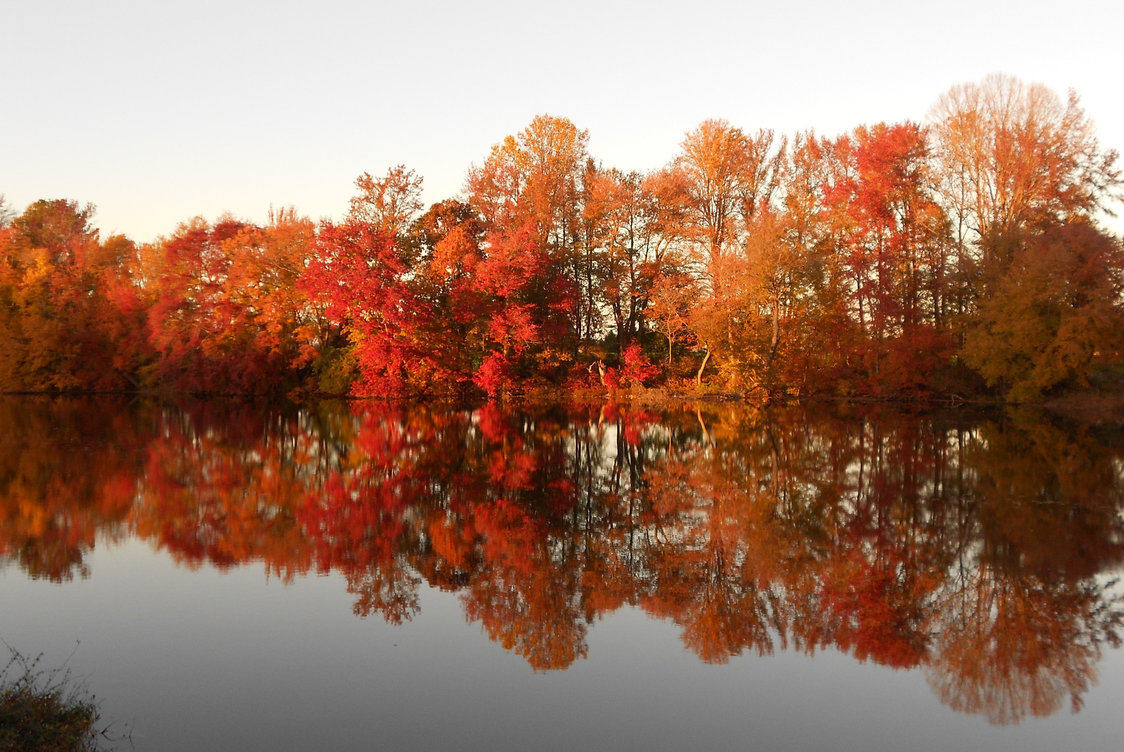 Fall Foliage at Lums Pond State Park