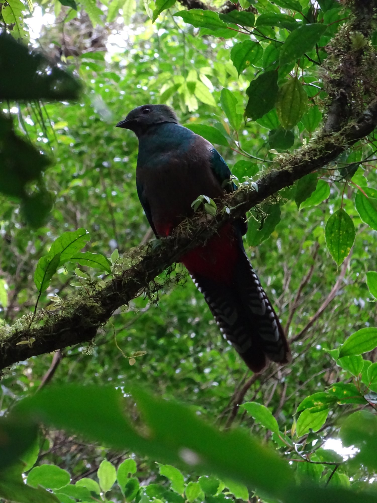 Birds of Monteverde Rainforest