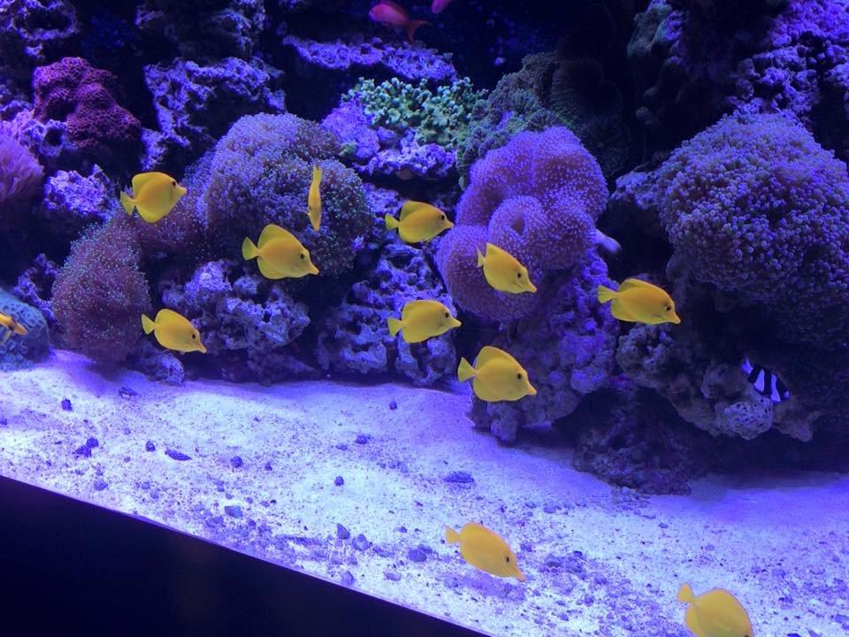 Mystic Aquarium Ct Top Tips Before You Go With Photos