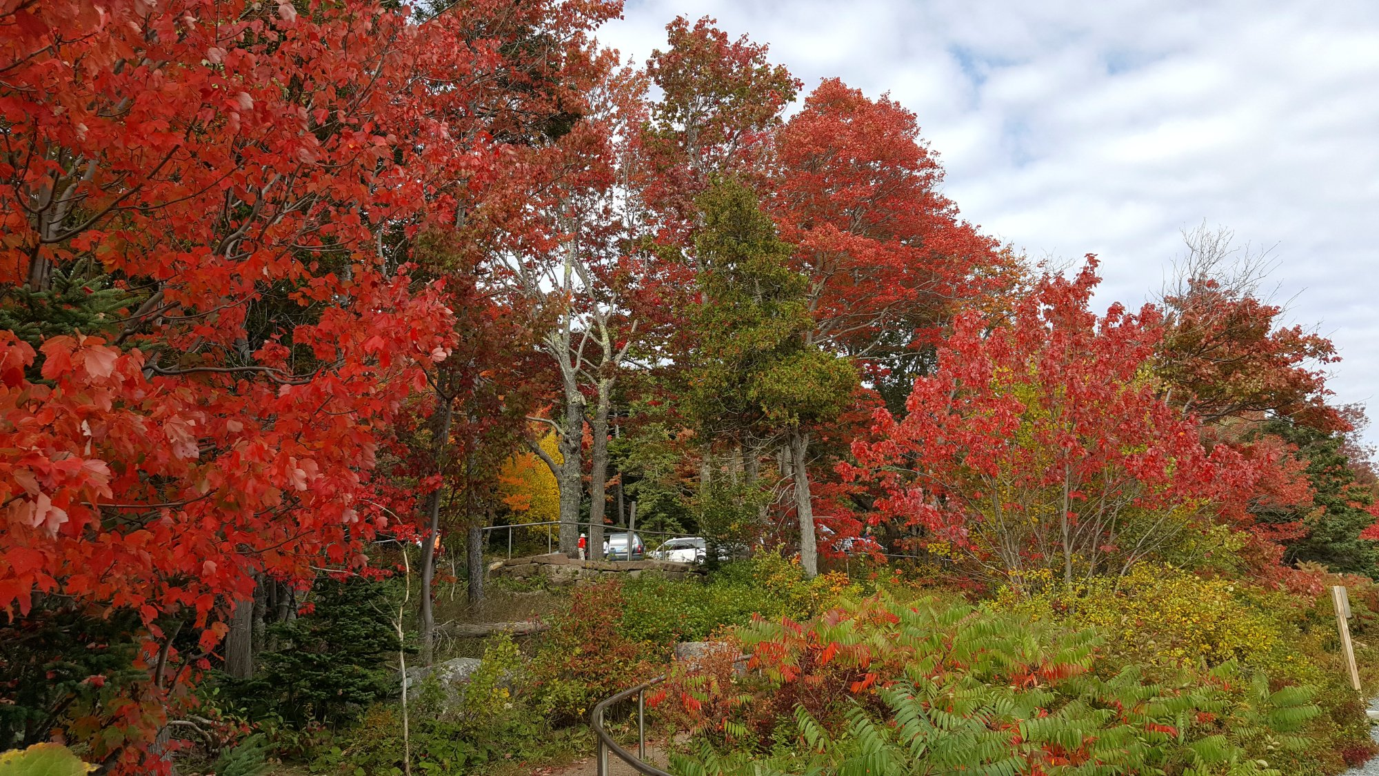 Beautiful Fall colors in Acadia National Forest.