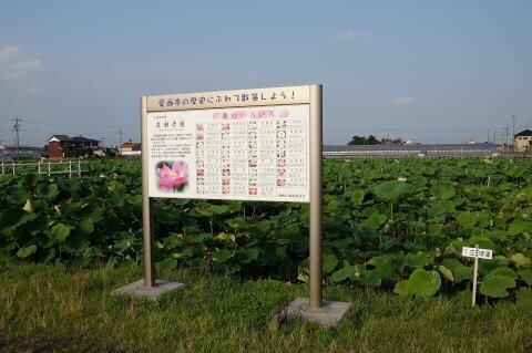 Preserved Akahasu Field