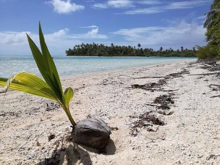 'TripAdvisor' from the web at 'https://media-cdn.tripadvisor.com/media/photo-o/11/5b/2b/92/spiaggia.jpg'