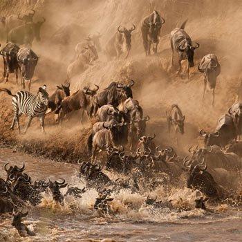 The Guide Safaris