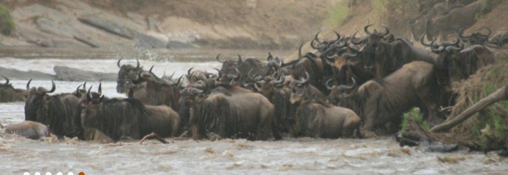 Best Adventure Safaris Ltd