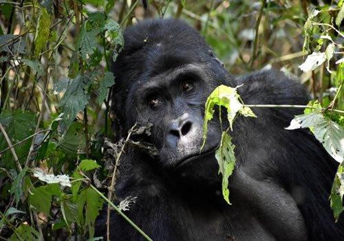 Gorilla Hub Tours