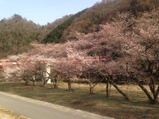 Kamitono Sakura Park