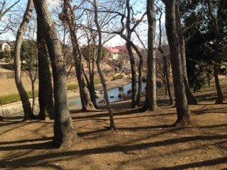 Kinunodaisakura Park