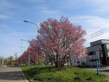 Mikaho Park