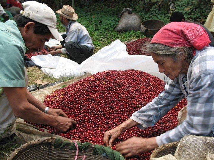 Farmers in El Salvador