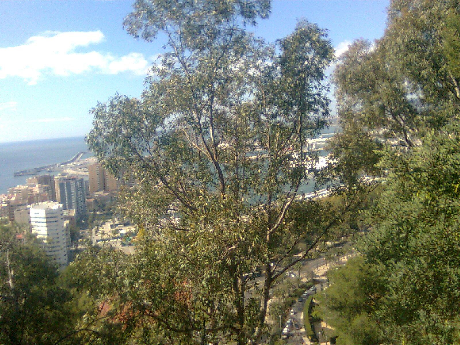 Malaga: Porto dalla vegetazione collina Gibralfaro